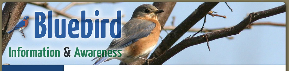 Bluebird Information, Bluebird Awareness